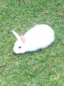Mixed breed rabbit Cranbourne Casey Area Preview