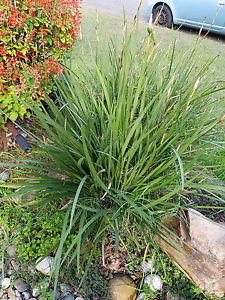 Free plants, diets Padstow Heights Bankstown Area Preview