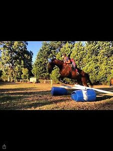 Horse jobs wanted Mirboo North South Gippsland Preview