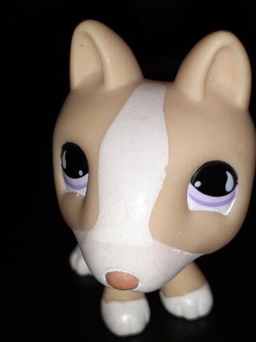 Figurine  petshop  original  chien dog bull terrier 860   pet shop lps