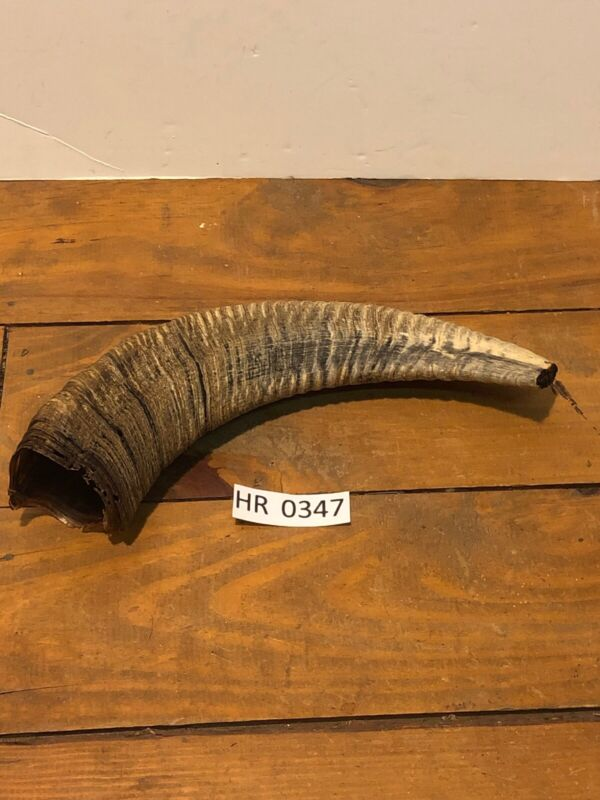 Ram Horn Outdoors Hunting Wildlife Rustic Decoration texas Hill Country HR0347