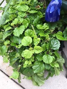 Great plants for sale.  House hold plants