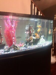 Unique curved fish tank/bow front fish tank