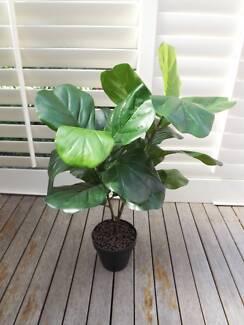 Artificial 65cm Fiddel leaf plant