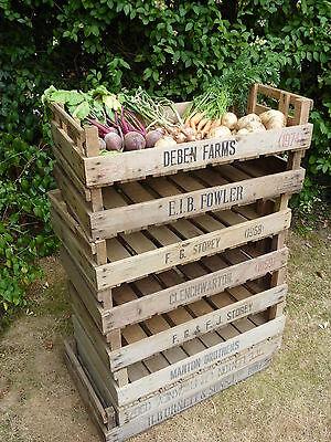 8 XL VINTAGE APPLE FARM CRATES POTATO WOODEN TRAY BOXES