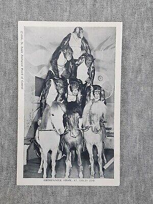 Vintage Postcard 1946 Chimpanzee Show St Louis Zoo Missouri Monkey Horse St . Louis Zoo