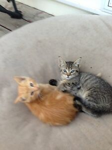 Kittens looking for a good home