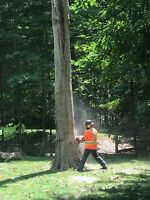 Lot clearing and tree removals !