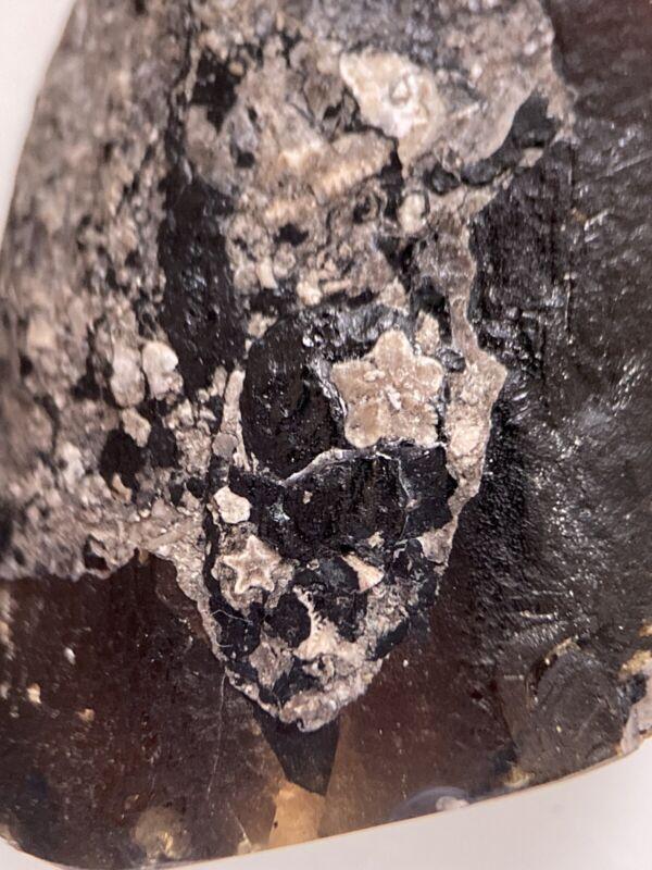 3 Sea Crinoids, Aquatic Fossil Inclusion Genuine Burmite Myanmar Amber, 98MYO