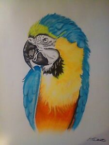 A2 Pastel Bird Drawing Raymond Terrace Port Stephens Area Preview