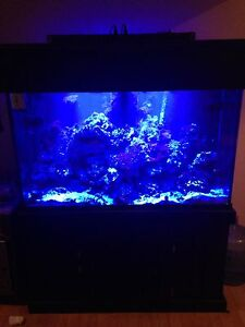 110 Gallon SaltwaterAquarium