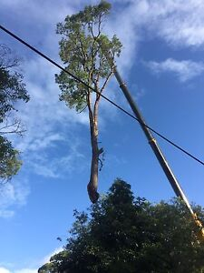 Trees&StumpsSolutions truck and chipper hire . Campbelltown Campbelltown Area Preview