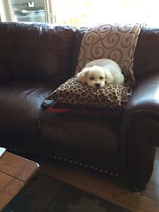 WANTED:- (st Albert area)