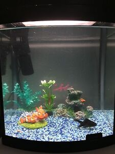 Cold or tropical fish aquarium Fairview Park Tea Tree Gully Area Preview