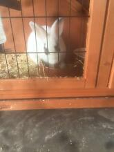 Rabbit and Hutch Tarneit Wyndham Area Preview
