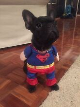 Superman Halloween Dog Costume Cairns North Cairns City Preview