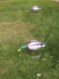 Field mallard duck decoy