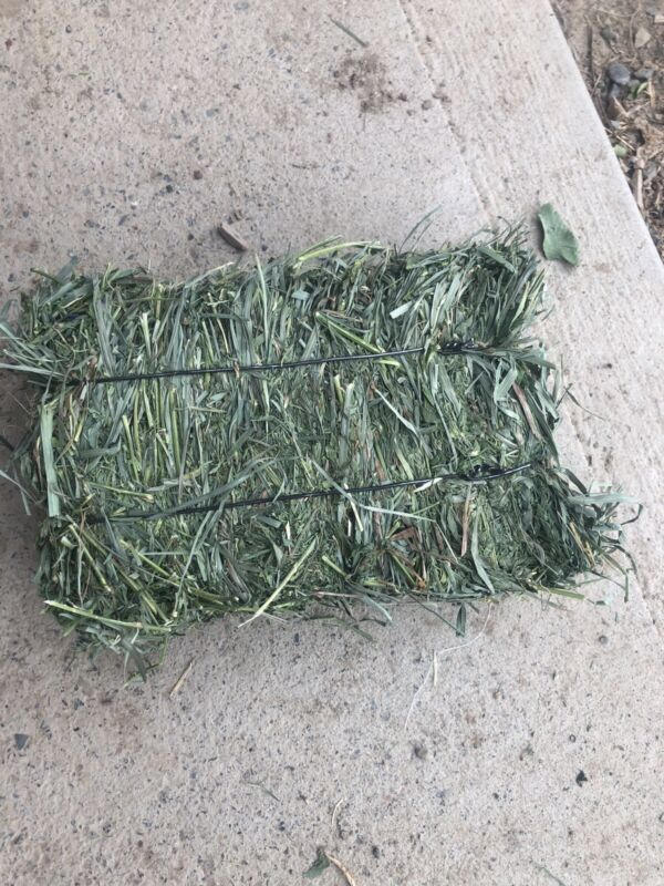 Alfalfa Grass Hay