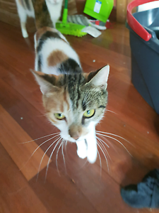 Beautiful natured cats urgently need  good home Ashbury Canterbury Area Preview