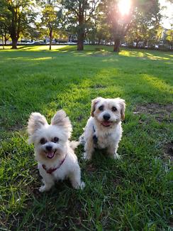 Experienced Dog Walker/sitter Brunswick East