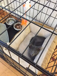 Free kitten and cat bed