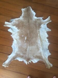 Small Goat hide like cow hide Coolangatta Gold Coast South Preview