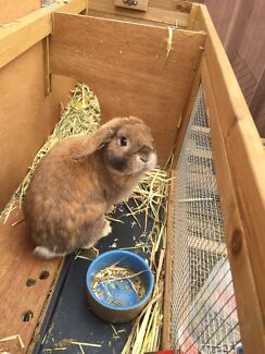 Rabbits and hutches  St Clair Penrith Area Preview