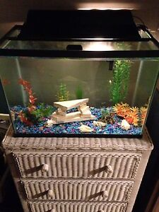 20 gallon tank with fish and accessories