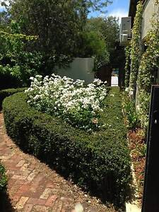A1 Garden Maintenance Bayswater Bayswater Area Preview