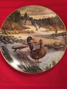 Collector Duck Plates
