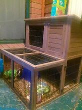 Guinea Pigs with two story hutch and accessories White Sands Murray Bridge Area Preview