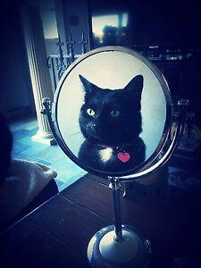 Cat Care / Cat Sitter / Pet Sitter