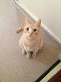 1 yr old male cat free to good home