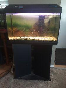 20 gal aquarium and stand