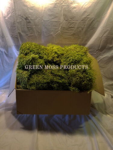 Sheet Moss 25-30 Sq.Ft. Live Natural green dried decor moss live FREE SHIPPING