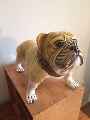 Superb Pottery Vintage British Bulldog Retro Man Cave