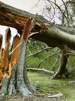 Storm clean up (tree removal)