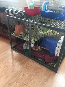 3 chinchillas all male grey and huge cage 100$