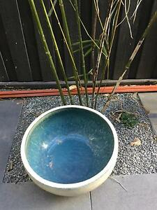 Glazed water/fish bowl Annandale Leichhardt Area Preview