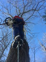 Looking for a tree climber