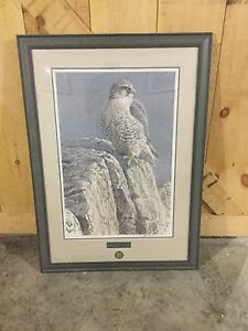 Ducks unlimited framed photograph - Robert Bateman