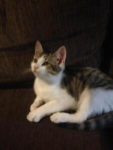 Kitten looking for new home Mill Park Whittlesea Area Preview