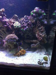 salt water marine fish tank Armadale Armadale Area Preview