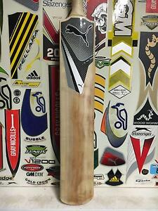 Puma Full Size English Willow Cricket Bat Mermaid Waters Gold Coast City Preview