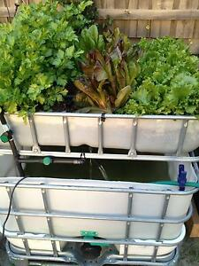 IBC Aquaponic system South Morang Whittlesea Area Preview