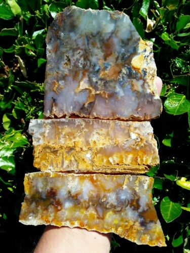 THREE (3) TOP QUALITY GRAVEYARD POINT PLUME AGATE SLAB MARCASITE BLUE RED 13.2OZ