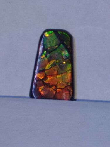 Beautiful dragon pattern freeform ammolite