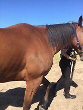 Lease off property horse Forrestfield Kalamunda Area Preview