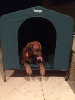 XL DOGHOUSE Glendalough Stirling Area Preview