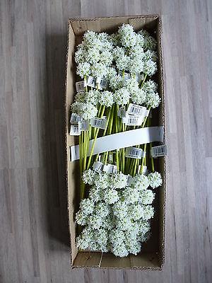 72 x Allium 72tlg. Pick Blüte Kunstblume Kunstpflanze 32 cm weiß 301122-40 F16